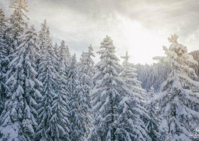 Ski dans les sapins