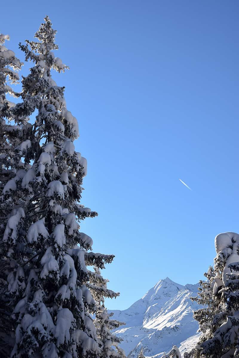 La Rosière randonnée raquettes sapins montagne