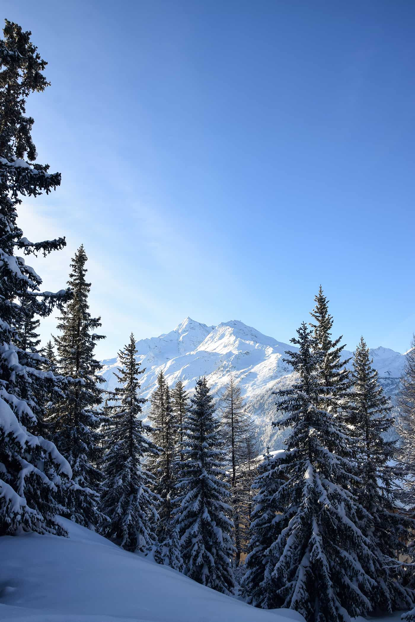 La Rosière mont pourri sapins